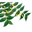 Nimbamedžių aliejus,ekologiškas