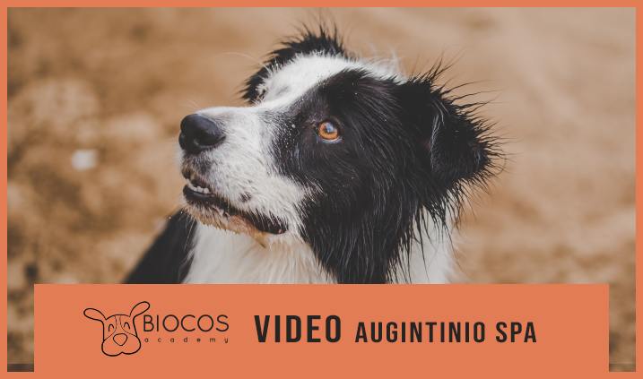 VIDEO Augintinio SPA