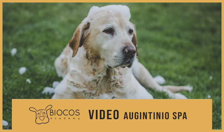 VIDEO - Augintinio SPA