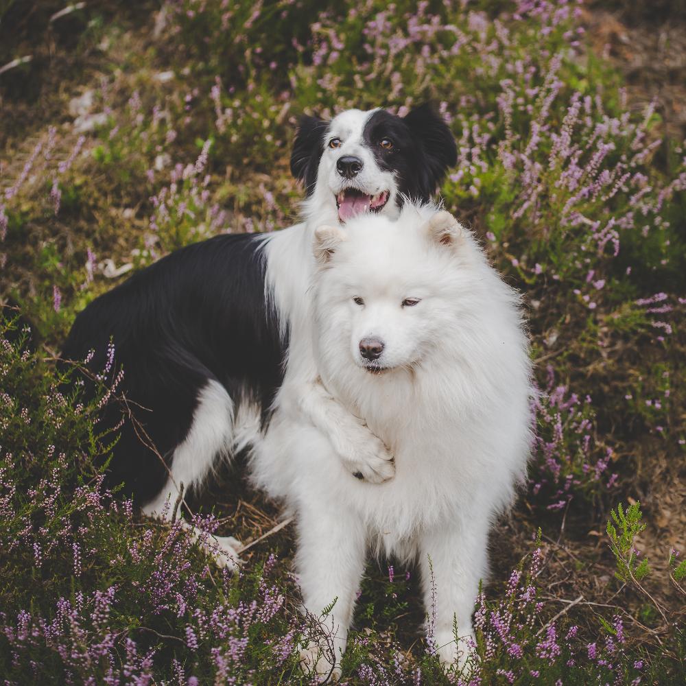 Draugiški gyvūnams, gamtai ir žmogui